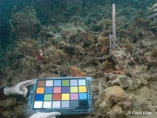 time-series-photos-of-coral